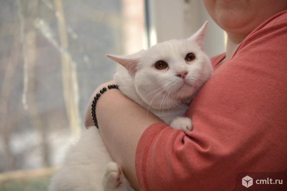 Кот Витольд - в хорошие руки. Фото 3.