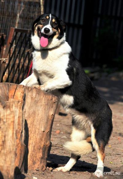 Карамелька, небольшая собачка, коротколапик. Фото 1.