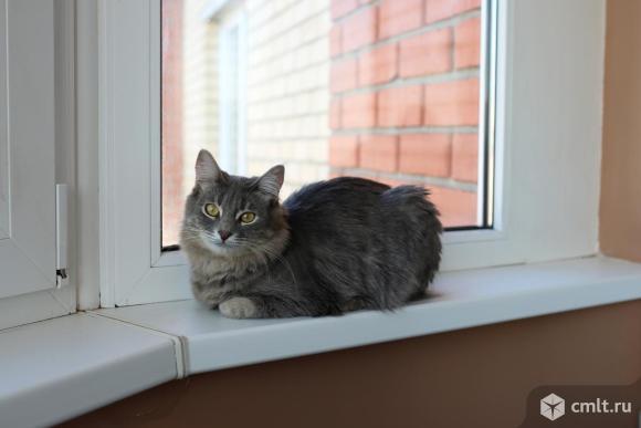 Кошечка ищет дом. Фото 1.