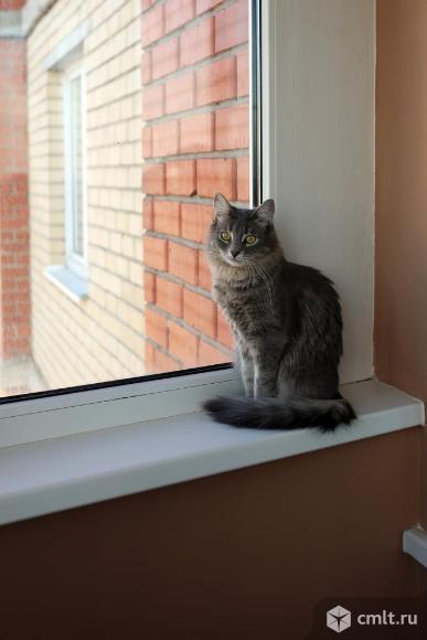 Кошечка ищет дом. Фото 3.