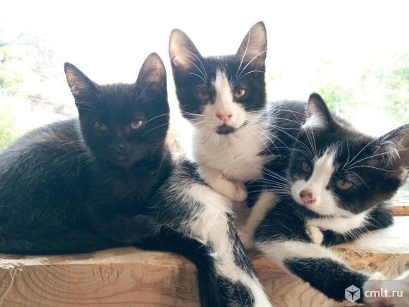 Ищем дом котятам!. Фото 1.