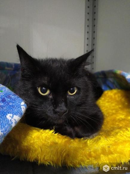 Элвис -черный кот. С ним повезет. Фото 1.