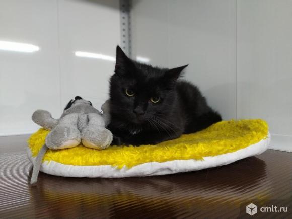 Элвис -черный кот. С ним повезет. Фото 3.