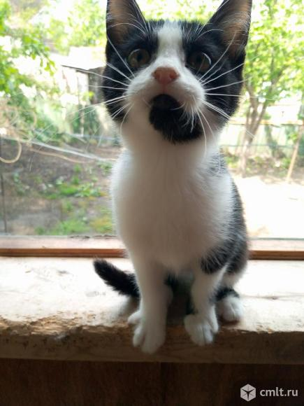 Ищем дом котятам!. Фото 8.