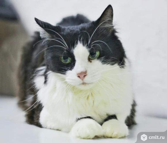 Чудесная кошка для уютных вечеров. Фото 1.