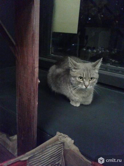 Молодая кошка в добрые руки. Фото 1.