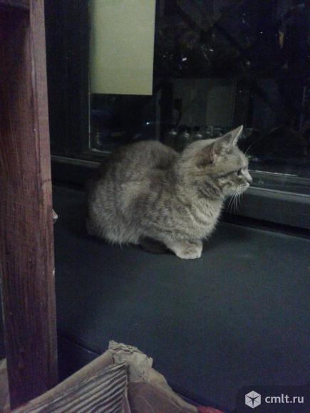Молодая кошка в добрые руки. Фото 9.