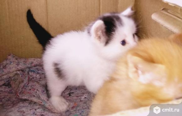 Котят в добрые руки отдам. Фото 1.