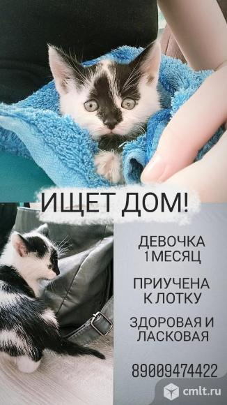 Нужен дом для котёнка!. Фото 1.