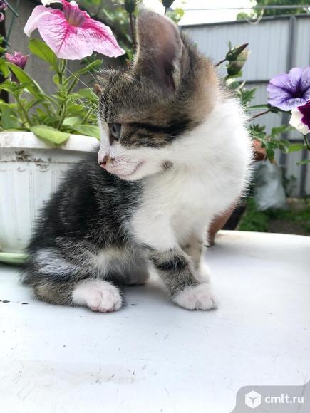 Отдам котёнка в добрые руки!. Фото 1.