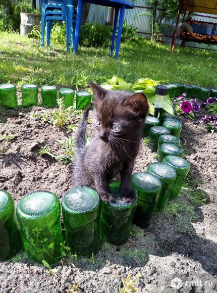 Котята. Фото 7.