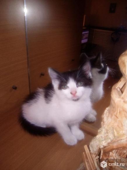 Котята в подарок. Фото 3.