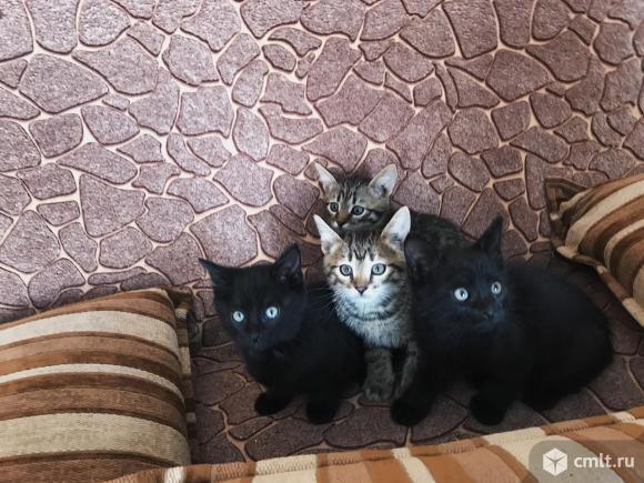 Отдадим котят. Фото 1.