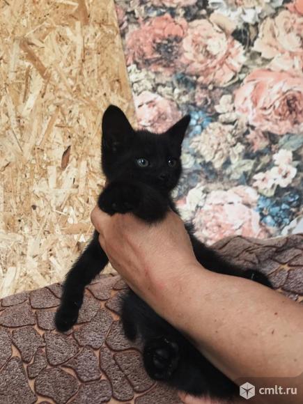 Отдадим котят. Фото 4.