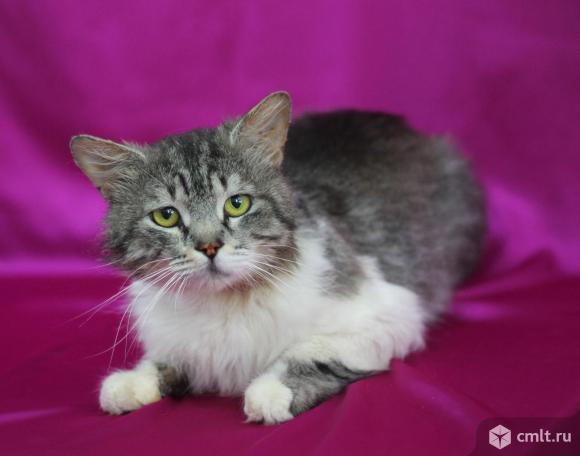 Добродушный кот по имени Хвост. Фото 6.
