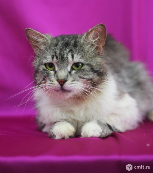 Добродушный кот по имени Хвост. Фото 1.