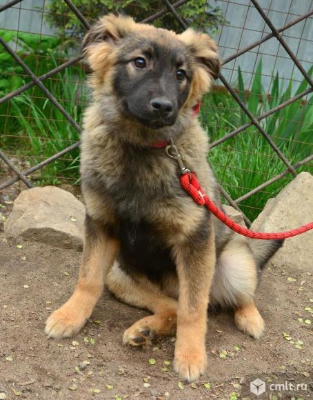 Щенок Ульяна 6 месяцев. Фото 1.
