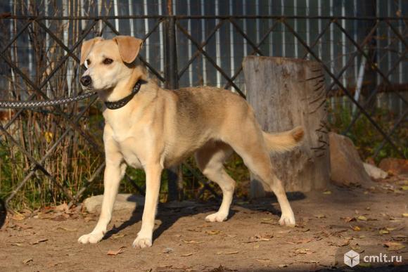 Молодая стерилизованная собачка Рената ищет дом. Фото 2.