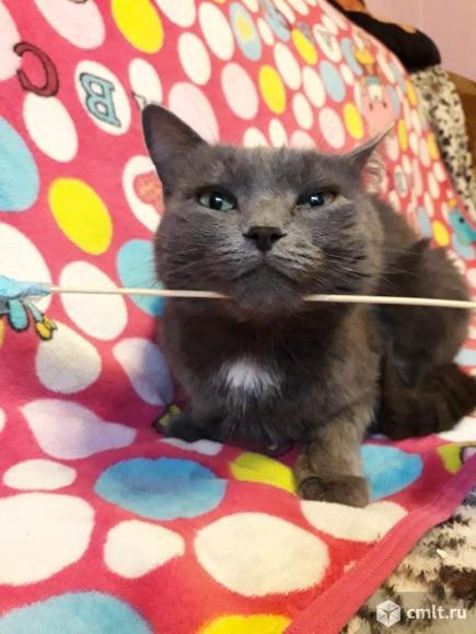 Отдам стерилизованную кошку в хорошие руки. Фото 4.