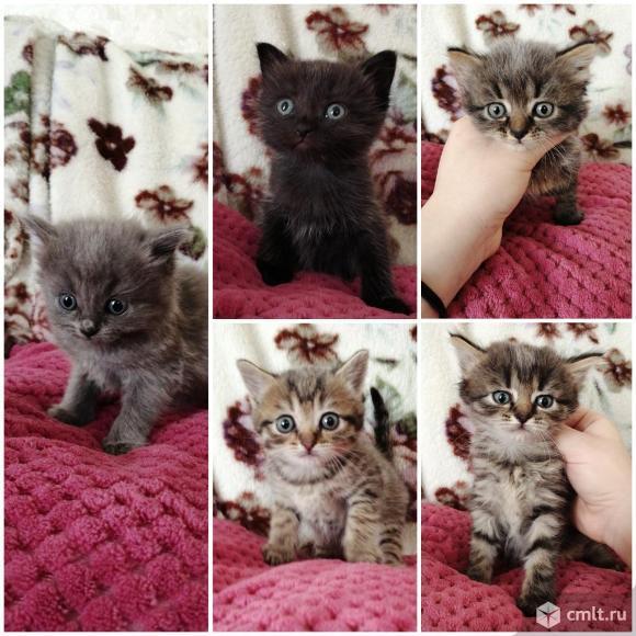 Замечательные котятки в добрые руки. Фото 1.