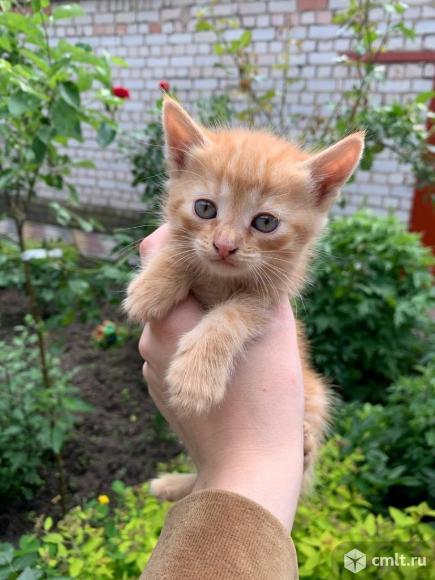 Рыжие котята. Фото 1.