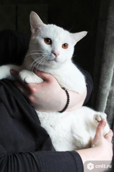 Кот Витольд - в хорошие руки. Фото 1.