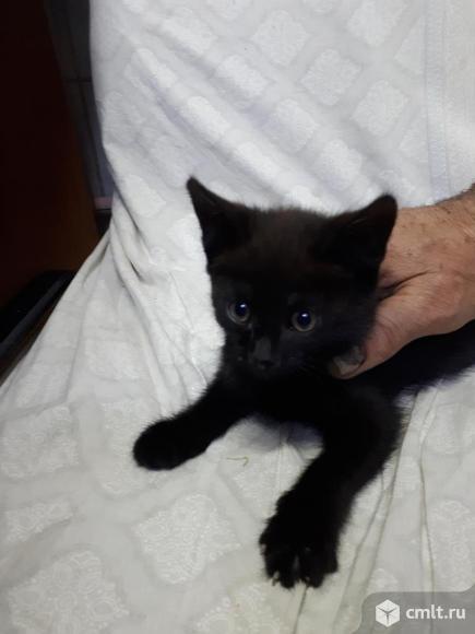 Девочка, черная. Возраст примерно 1,5 месяца. Фото 1.