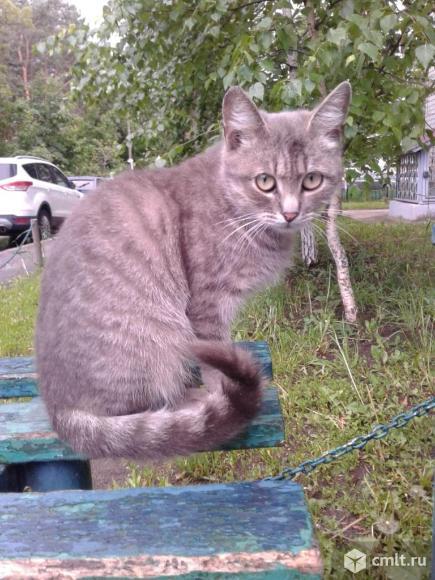 Кошечка серого окраса. Фото 1.