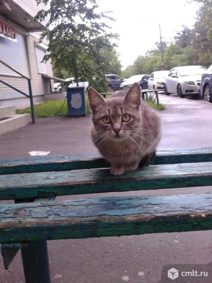 Кошечка серого окраса. Фото 6.