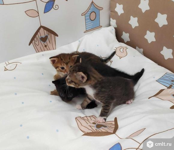 Отдадим котят в хорошие руки. Фото 1.