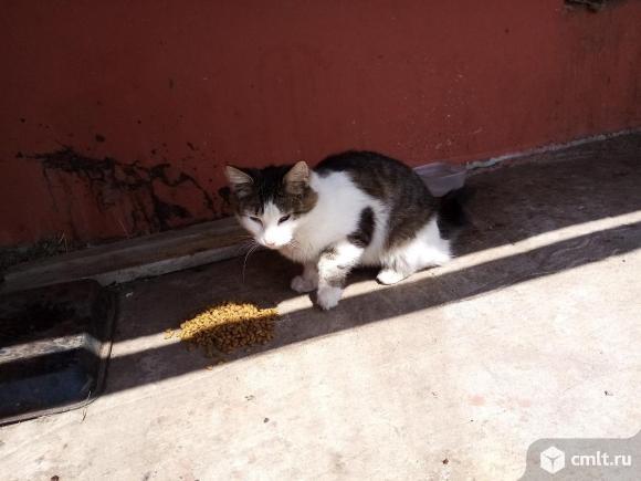 Молодой кот Максик. Фото 1.