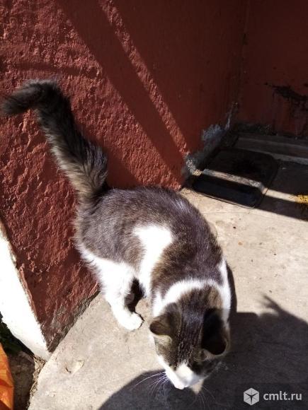 Молодой кот Максик. Фото 3.