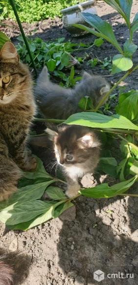 Котята ищут дом)))). Фото 6.