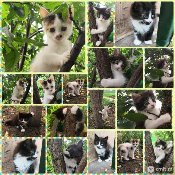 Котята. Фото 12.