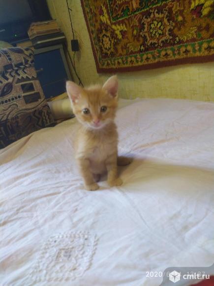 Отдам котят в хорошие руки. Фото 1.
