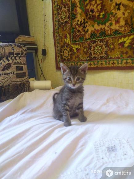 Отдам котят в хорошие руки. Фото 6.