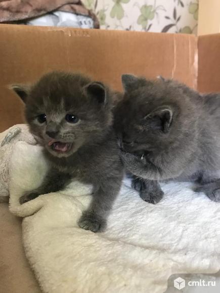 Котята в добрые руки!. Фото 1.