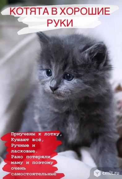 Котята в добрые руки!. Фото 4.