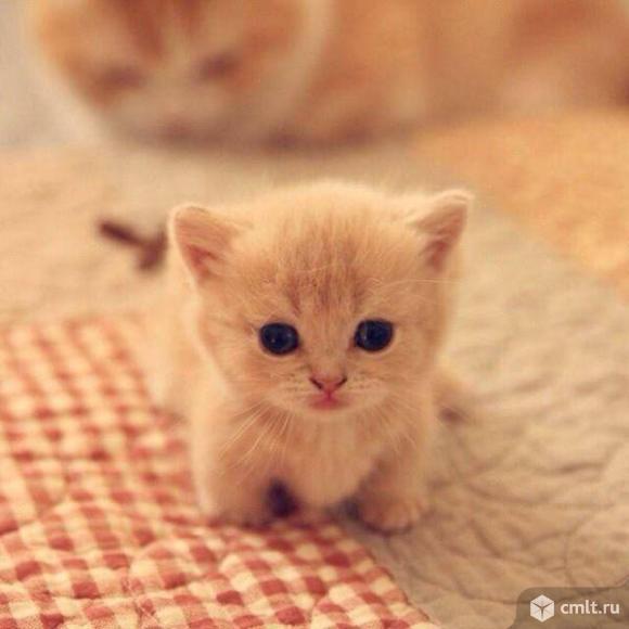 Ищем xозяина котёнку. Фото 1.