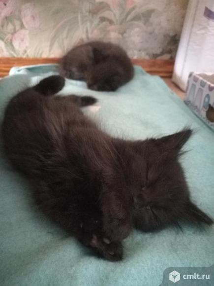 Котята. Фото 8.
