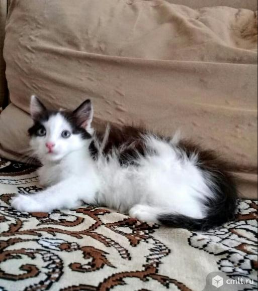 Отдам в хорошие руки полусибирского котёнка. Фото 1.