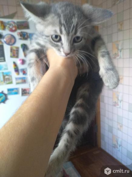 Отдам котенка девочку в хорошие руки. Фото 1.