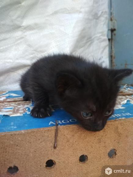 Котята в добрые руки. Фото 1.