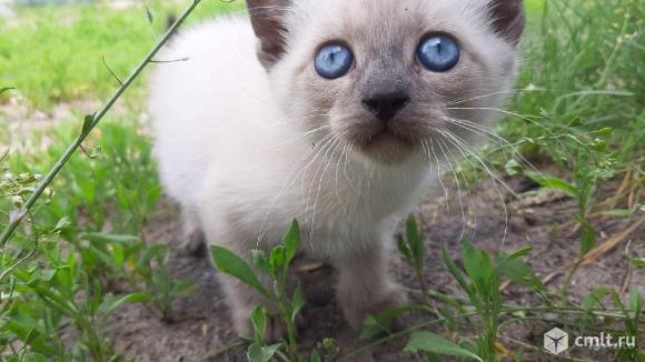 Котятки. Фото 1.