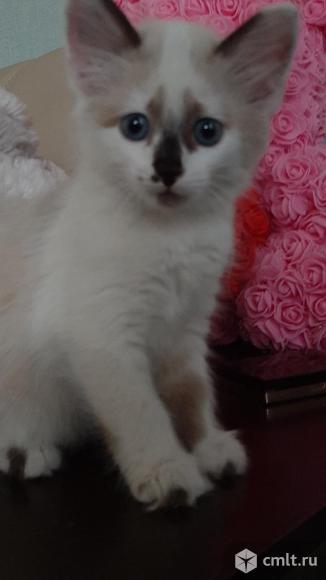 Котятки. Фото 4.