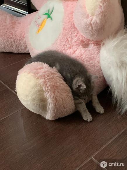 Кошечка. Фото 5.