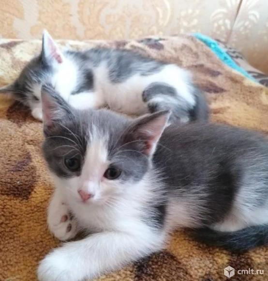 Отдам котят в добрые руки!. Фото 1.