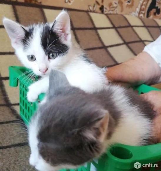 Отдам котят в добрые руки!. Фото 2.