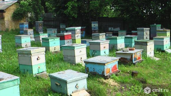 Продается пасека на рутовских рамках вместе с ульями и медом. Фото 1.