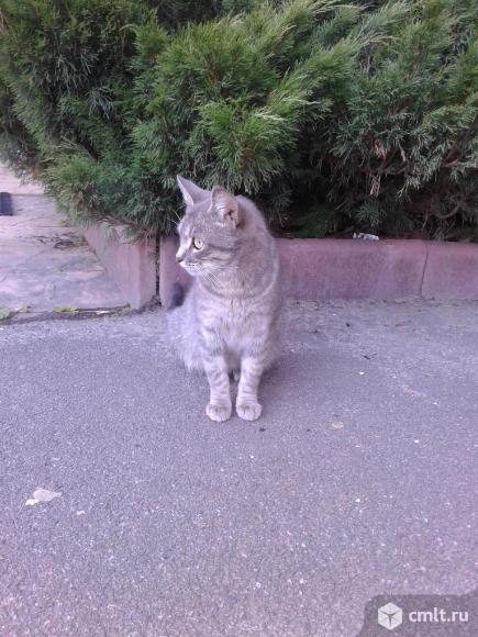 Кошечка в добрые руки. Фото 5.